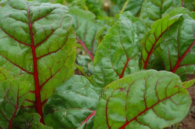 Салат из листьев свеклы с орехами