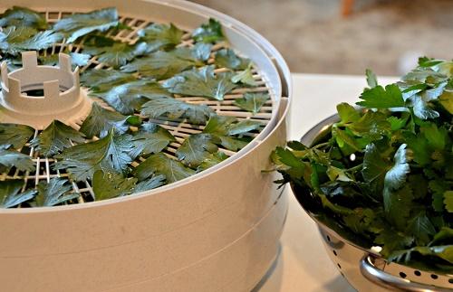 Как правильно сушить зелень в домашних условиях