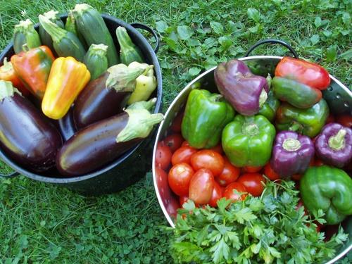 Простой салат из баклажанов с помидорами и перцем